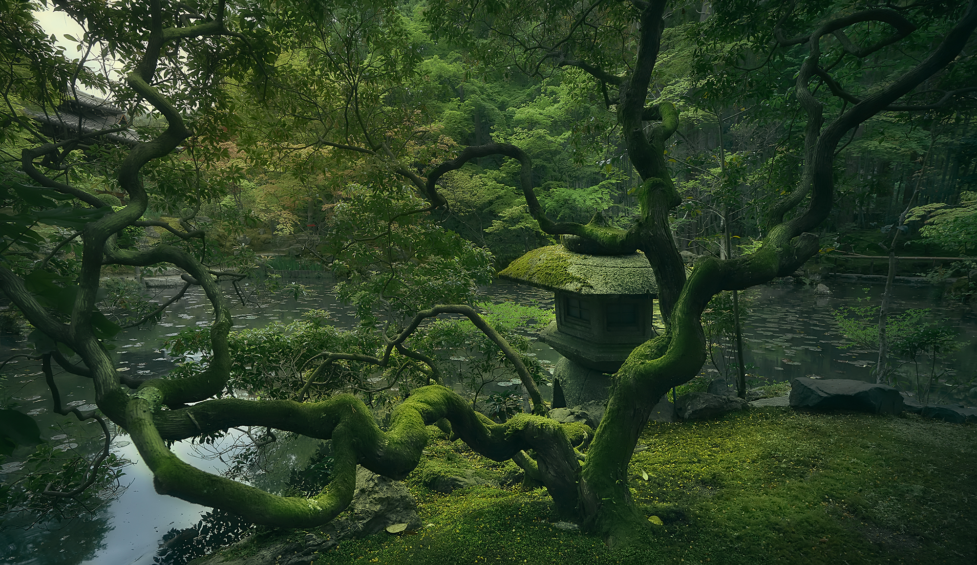 The Japanese Tree Despues